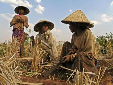 RCEP Trade Deal to Intensify Asia Land Grabs