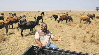 South Africa: Official Extort Black Farmers